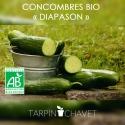 Graines Concombre BIO