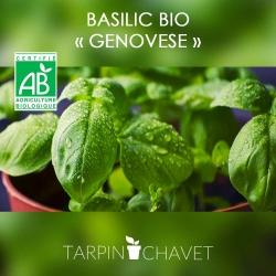 Graines de Basilic BIO