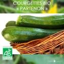 Graines de Courgettes Bio