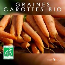 Graines de Carottes Bio