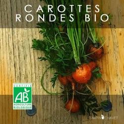 Graines de Carottes Rondes Bio