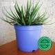 Pot de Fleurs Horticole en plastique de 2 litres - Couleur : bleu lavande