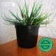 Pot de Fleurs Horticole en plastique de 2 litres - Couleur : NOIR