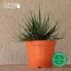 Pot de Fleurs Horticole en plastique de 2 litres - Couleur : orange potiron