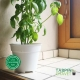 """Pot de Fleurs Horticole - 1 Litre / Coloris """"BLANC"""""""