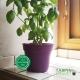 Pot de Fleurs Horticole - 1 Litre / Coloris VIOLET PRUNE