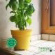 Pot de Fleurs Horticole - 1 Litre / Coloris JAUNE CITRON