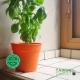 Pot de Fleurs Horticole - 1 Litre / Coloris ORANGE POTIRON