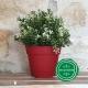 Pot de Fleurs Horticole - 1 Litre / Coloris ROUGE CERISE