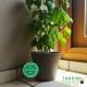 Pot de Fleurs Horticole - 1 Litre / Coloris TAUPE