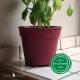 Pot de Fleurs Horticole - 1 Litre / Coloris FUSHIA