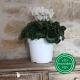 Pot de Fleurs Horticole 3 litres - coloris BLANC