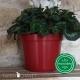 Pot de Fleurs Horticole 3 litres - coloris ROUGE CERISE