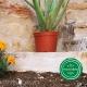 Pot de Fleurs Horticole 3 litres - coloris Terre cuite