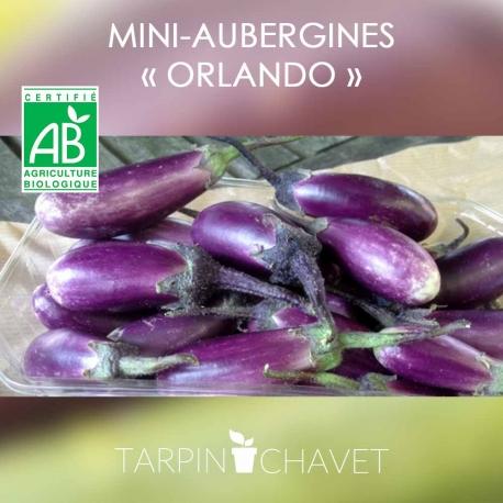 """Graines Aubergine BIO """"Mini-Orlando"""""""