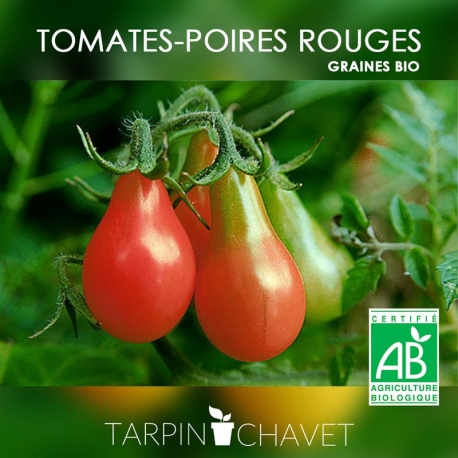 Graines de Tomates-Poires Rouges BIO