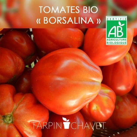 "Graines Tomates BIO ""Borsalina"""