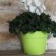 Pot de Fleurs Horticole 4 litres couleur
