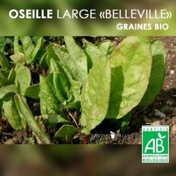 Graines d'Oseille Bio