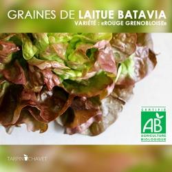 """Graines de Laitue Batavia """"Rouge Grenobloise"""""""