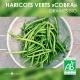 """Graines de Haricots Verts Bio """"Cobra"""""""