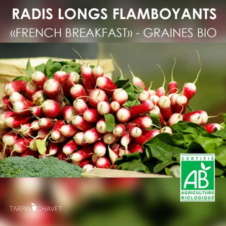 "Graines de Radis Flamboyant Bio ""French Breakfast"""