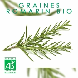 Graines de Romarin officinal Bio