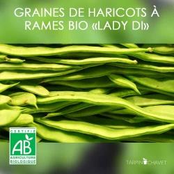 """Graines de Haricots à Rames d'Espagne Bio """"Lady Di"""""""