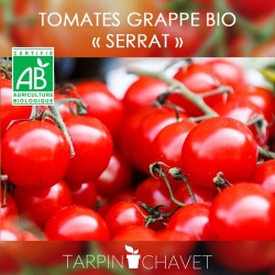 Graines de Tomates en Grappe SERRAT