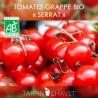 Graines de Tomates Bio en Grappe SERRAT