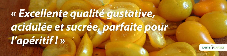 Visuel Tomate-poire mini - Tarpin-chavet.fr