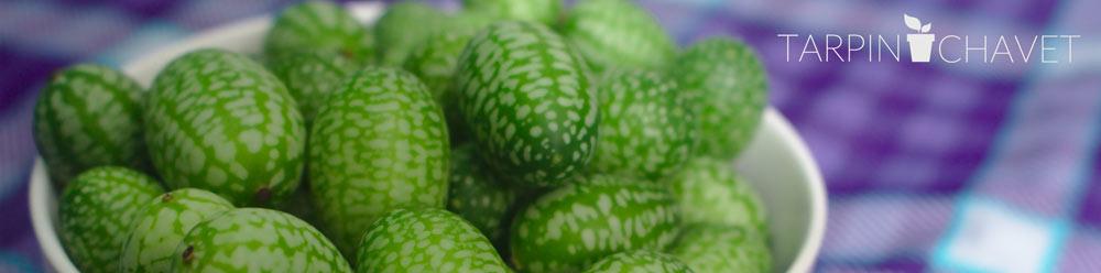 visuel concombre mini pastèque cucamelon