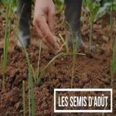 🌱 Que Semer en Août au Potager ? RDV sur la page Facebook Tarpin Chavet ! Et préparez vos légumes dès maintenant pour profiter de leurs bienfaits à la rentrée... . #jardinage #potager #potagerbio #jardin #semis #healthy #food #healthyfood #regimesain #legumes #legumesfrais