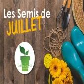 Les Semis de Juillet au Potager 🌱 En vidéo ! Dans votre boite mail tous les mois, et sur notre Facebook Tarpin Chavet ! #potager #jardinage #semis